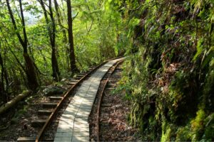 【IDEAS FOR GOOD】オンラインプログラム「Journey of Regeneration 再生の旅」に代表・加藤が登壇します